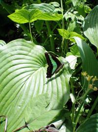 武蔵野市立むさしの自然観察園に生息するチョウ