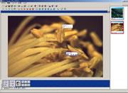 生物顕微鏡で見た画面