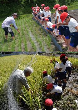 田植えから稲刈りまで米作りを体験