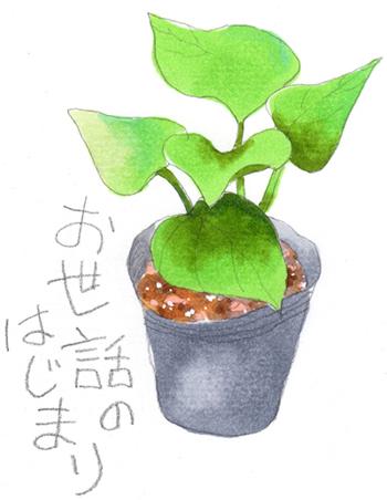 食育と授業:サツマイモだいさくせん イラスト