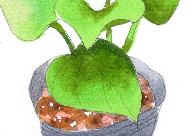 サツマイモだいさくせん(vol.1)【食と生命、食と感謝】[小1・生活科]